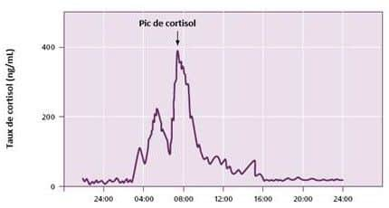 cortisol rythme circadien