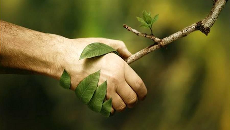 Techniques et outils de la naturopathie