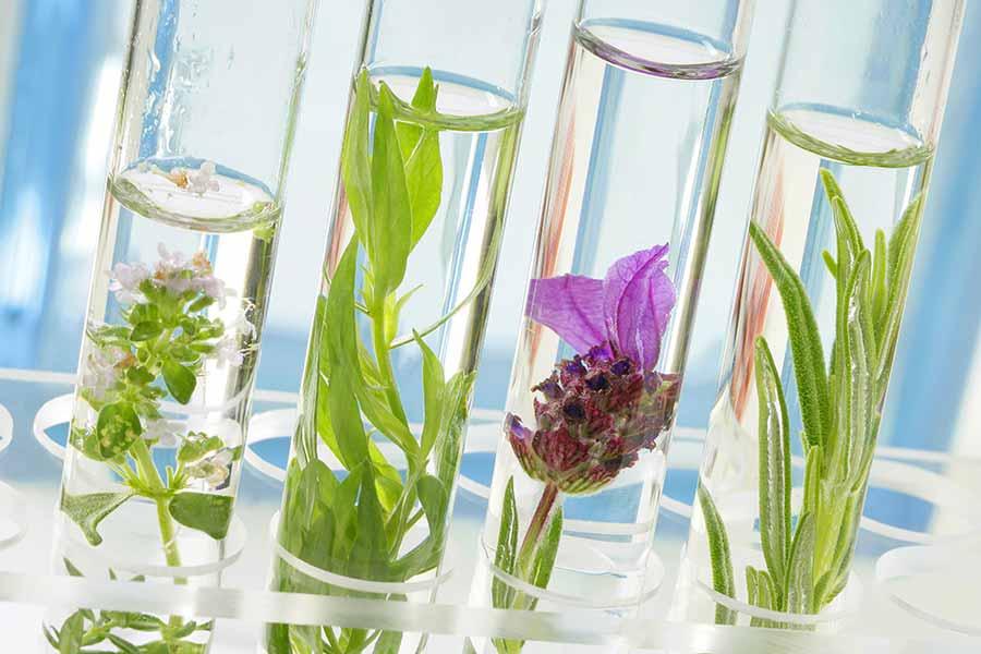 phytothérapie et plantes médicinales