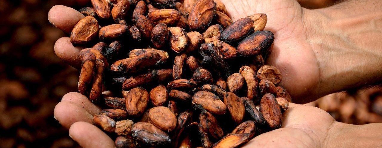 Éclat de fève de cacao dans les mains dune personne