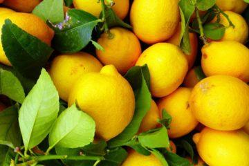 Photo de plusieurs citrons bien mûr