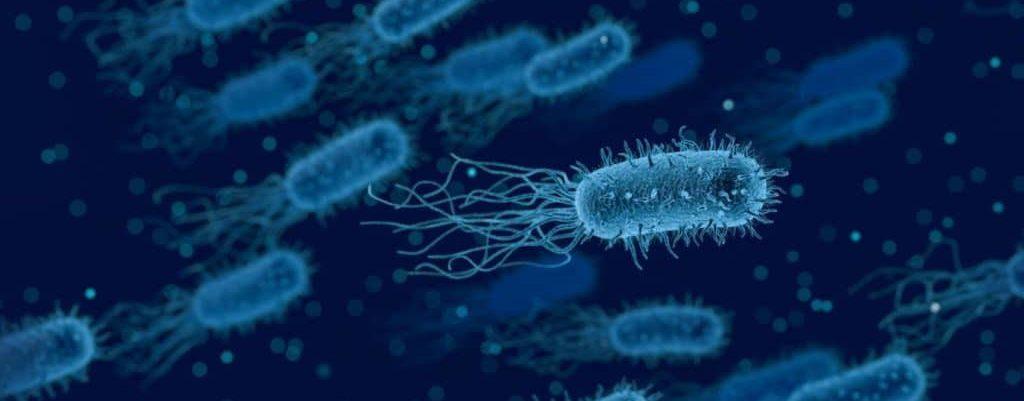 Illustration d'une bactérie