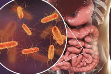 Illustration du système digestif et de sa flore intestinale qui la constitue pour présenter un article sur la dysbiose.