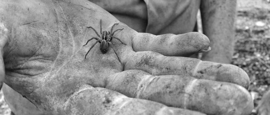 photo en noir et blanc d'une main contenant une petite araignée.