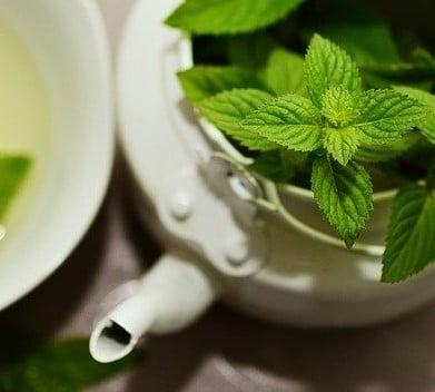 Photo d'une tisane de plantes médicinales pouvant aider dans certains troubles de santé.